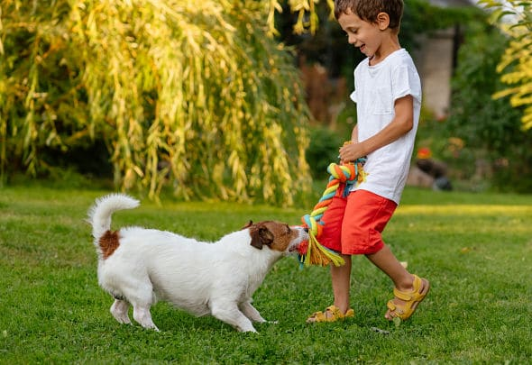 little boy and dog playing